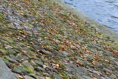 Κάθοδος στο νερό υπό μορφή περιπάτου κυβόλινθων σε ένα πάρκο στο νησί Krestovsky στοκ φωτογραφίες