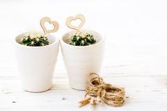 Κάκτοι καρδιών αγάπης με το ξύλινο και φυσικό σχοινί Στοκ Εικόνες