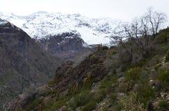 Κάκτοι στην εθνική επιφύλαξη RÃo Blanco, κεντρική Χιλή, μια υψηλή κοιλάδα βιοποικιλότητας στο Los Άνδεις στοκ φωτογραφία