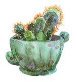 Κάκτος απεικόνισης Watercolor στο δοχείο λουλουδιών Στοκ φωτογραφία με δικαίωμα ελεύθερης χρήσης