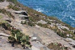 Κάκτος βράχου στοκ φωτογραφία με δικαίωμα ελεύθερης χρήσης