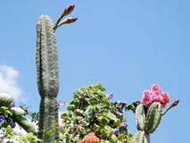 Κάκτος και άλλα λουλούδια 2010 Monosson SAN Pedro Neve Στοκ εικόνα με δικαίωμα ελεύθερης χρήσης