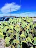 Κάκτος και μπλε αυτοκίνητο στην κουκούλα οχυρών, TX στοκ φωτογραφίες