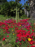 Κάκτος και λουλούδια Στοκ εικόνες με δικαίωμα ελεύθερης χρήσης