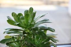 Κάκτος και succulent Στοκ εικόνα με δικαίωμα ελεύθερης χρήσης