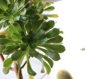 Κάκτος και Succulents Στοκ εικόνα με δικαίωμα ελεύθερης χρήσης