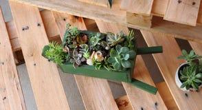 Κάκτος και Succulents Στοκ Φωτογραφίες
