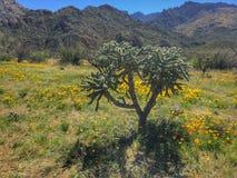 Κάκτος και wildflowers στοκ εικόνες με δικαίωμα ελεύθερης χρήσης