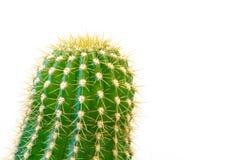 Κάκτος που απομονώνεται πράσινος στο λευκό Στοκ Εικόνα