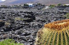 Κάκτος σε μια ηφαιστειακή θέση Στοκ Εικόνες