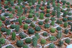 Κάκτος στον κήπο Στοκ φωτογραφία με δικαίωμα ελεύθερης χρήσης