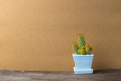 Κάκτος στο κεραμικό δοχείο στον ξύλινο πίνακα με τον τρύγο Στοκ Εικόνες