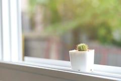 Κάκτος στο παράθυρο Στοκ Φωτογραφία
