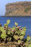 Κάκτος στο oceanside Στοκ φωτογραφίες με δικαίωμα ελεύθερης χρήσης