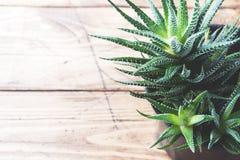Κάκτος flowerpot στο ξύλινο υπόβαθρο Εκλεκτική εστίαση διάστημα αντιγράφων στοκ εικόνες με δικαίωμα ελεύθερης χρήσης