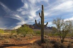 Κάκτος Saguaro και απόμακρα βουνά δεισιδαιμονίας στο χαμένο κρατικό πάρκο Αριζόνα Ολλανδού Στοκ εικόνες με δικαίωμα ελεύθερης χρήσης