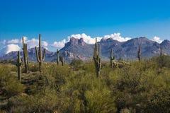 Κάκτος Saguaro στην έρημο της Αριζόνα ενάντια στο μπλε ουρανό & τα βουνά στοκ εικόνα
