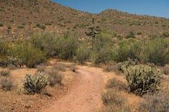 Κάκτος Saguaro στο ίχνος πλυσίματος Apache Στοκ φωτογραφίες με δικαίωμα ελεύθερης χρήσης