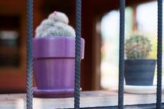 Κάκτος vase Στοκ Φωτογραφία