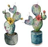 Κάκτος Watercolor με τα λουλούδια σε ένα δοχείο Χρωματισμένο χέρι opuntia με τα κόκκινα και κίτρινα λουλούδια που απομονώνονται σ ελεύθερη απεικόνιση δικαιώματος