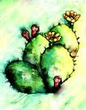 Κάκτος Watercolor διανυσματική απεικόνιση