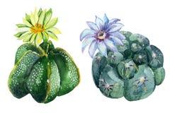 Κάκτος Watercolor Στοκ εικόνες με δικαίωμα ελεύθερης χρήσης