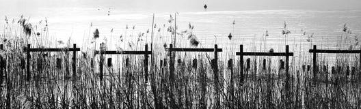 Κάλαμοι και νερό, γραπτοί Στοκ Εικόνες