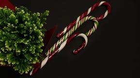 Κάλαμοι καραμελών Χριστουγέννων και πράσινες εγκαταστάσεις στοκ φωτογραφία