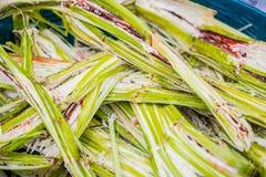 Κάλαμος ζάχαρης για την επαναχρησιμοποίηση βαγάσσης ενεργειακών ζαχαροκάλαμων ανακύκλωσης για το έγγραφο ινών φύσης και τα ανακύκ Στοκ Φωτογραφία