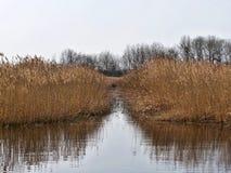 Κάλαμος που απεικονίζει σε μια λίμνη το φθινόπωρο στοκ φωτογραφία