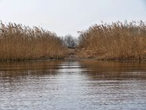 Κάλαμος που απεικονίζει σε μια λίμνη το φθινόπωρο στοκ εικόνα με δικαίωμα ελεύθερης χρήσης