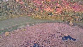 Κάλαμος στη λίμνη απόθεμα βίντεο