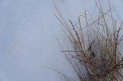 Κάλυψη χιονιού Στοκ εικόνες με δικαίωμα ελεύθερης χρήσης