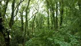 Κάμερα που εξετάζει επάνω τα ψηλά δέντρα σε ένα δάσος απόθεμα βίντεο