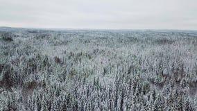 Κάμερα που πετά αργά επάνω από το μεγάλο δάσος τον κρύο χειμώνα απόθεμα βίντεο