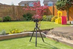 Κάμερα Fujifilm και τρίποδο Gitzo έτοιμο να πάρει τις εικόνες ενός πρόσφατα ολοκληρωμένου κήπου στοκ εικόνα με δικαίωμα ελεύθερης χρήσης