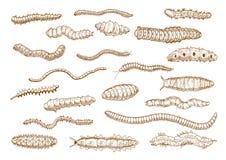 Κάμπιες, προνύμφες, σκουλήκια, γυμνοσάλιαγκες, σαρανταποδαρούσες Στοκ φωτογραφία με δικαίωμα ελεύθερης χρήσης