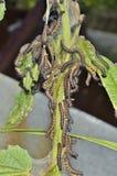 Κάμπιες στα φύλλα 1 Στοκ Φωτογραφία