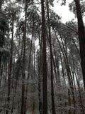 Κάμπτοντας δέντρα Στοκ Εικόνες