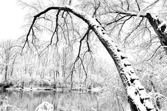 Κάμπτοντας δέντρο Στοκ εικόνες με δικαίωμα ελεύθερης χρήσης
