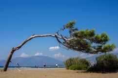 Κάμπτοντας υπόκλιση δέντρων πέρα από την όμορφη παραλία Dalyan, Τουρκία Στοκ Εικόνες