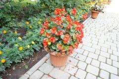 κάνετε τα λουλούδια το μήνυμα αγάπης της πολύ δοχείο ow εσείς Στοκ Εικόνες