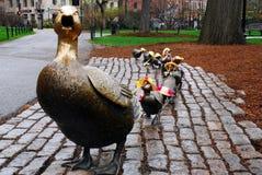 Κάνετε τον τρόπο για τους νεοσσούς Στοκ φωτογραφία με δικαίωμα ελεύθερης χρήσης