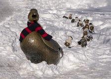 ` Κάνετε τον τρόπο για Duckings ` με την κα Duck που φορά το χειμερινό μαντίλι της, στοκ φωτογραφίες