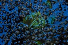 Κάνθαροι του Κολοράντο στο νερό Στοκ εικόνες με δικαίωμα ελεύθερης χρήσης