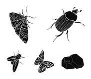 Κάνθαρος εντόμων αρθρόποδων, σκώρος, πεταλούδα, μύγα Τα έντομα καθορισμένα τα εικονίδια συλλογής στο μαύρο απόθεμα συμβόλων ύφους Στοκ Εικόνες