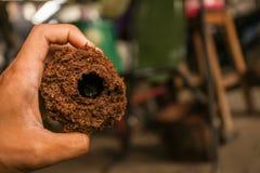 Κάνθαρος ρινοκέρων στην τρύπα Στοκ εικόνες με δικαίωμα ελεύθερης χρήσης