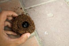 Κάνθαρος ρινοκέρων στην τρύπα Στοκ Εικόνες