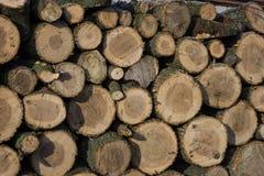 Κάνναβη για τις εργασίες στο ξύλο Στοκ φωτογραφία με δικαίωμα ελεύθερης χρήσης