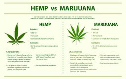 Κάνναβη εναντίον κάθετου infographic μαριχουάνα διανυσματική απεικόνιση